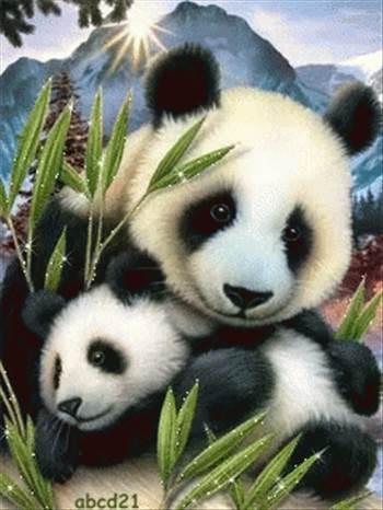 panda love.gif -