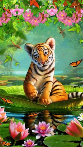 cute-tiger-animated (3).gif by Mediumystics