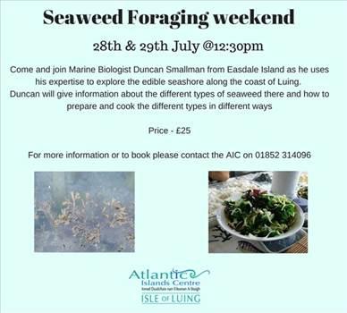 xSeaweed Foraging weekend 1.jpg by Allan