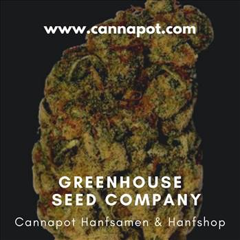 Greenhouse Seed Company (4).jpg by Cannapot
