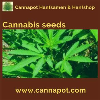 Cannabis Seeds.gif by Cannapot