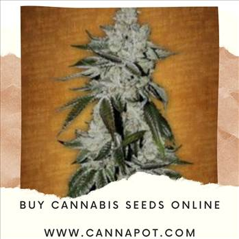 Buy cannabis seeds online (6).jpg by Cannapot
