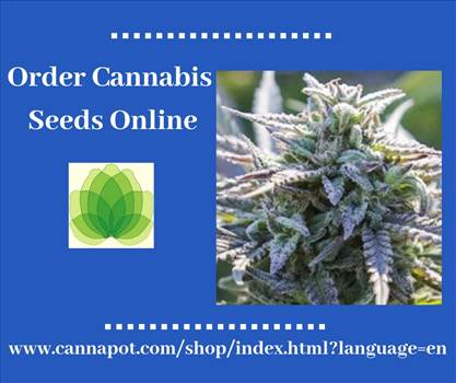 At Cannapot you find many regular genetics and different feminized marijuana seeds from well known breeders such as Sensi Seeds, DNA Genetics, Dinafem, Barneys Farm, Big Buddha, Karma Seeds, Serious, TGA Subcool, Rare Dankness, Brothers Grimm, Haute Genet