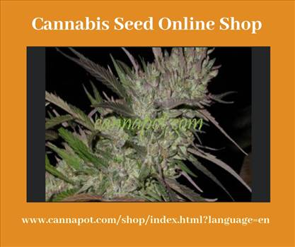 Cannabis seed online shop.jpg by Cannapot
