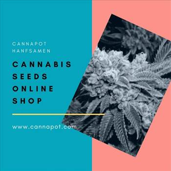 Cannabis Seeds Online Shop.gif by Cannapot