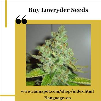 Buy Lowryder Seeds.jpg by Cannapot
