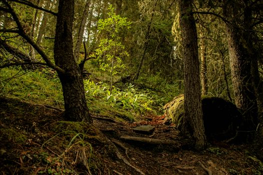 Sunlight In The Forest by Cochrane