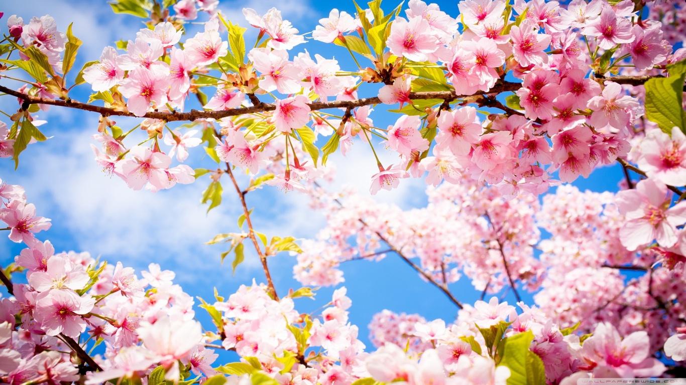 springtime_8-wallpaper-1366x768.jpg  by Acef Ebrahimi