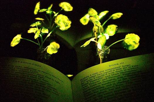 MIT-Glowing-Plants_0.jpg by Acef Ebrahimi