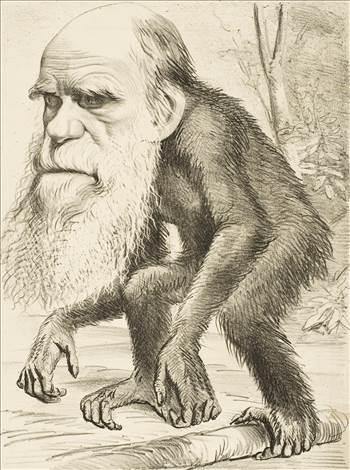 Editorial_cartoon_depicting_Charles_Darwin_as_an_ape_(1871).jpg by Schrodeger Henderson
