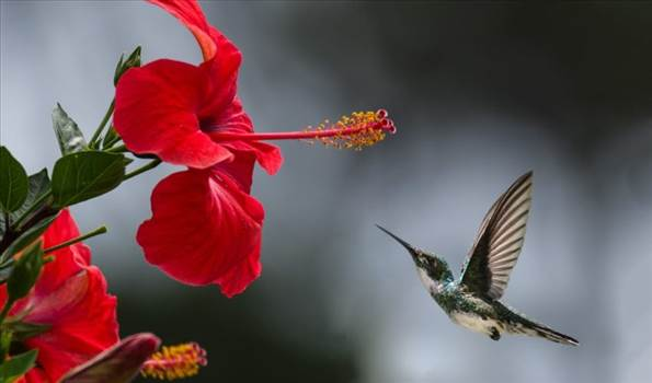 beautiful-beautiful-flowers-bird-1133957-850x500.jpg by Acef Ebrahimi