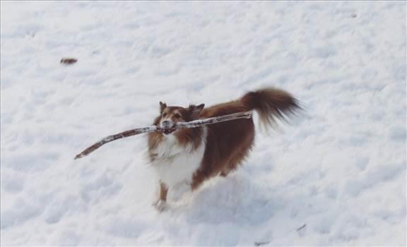 big stick you have.jpg by tim15856