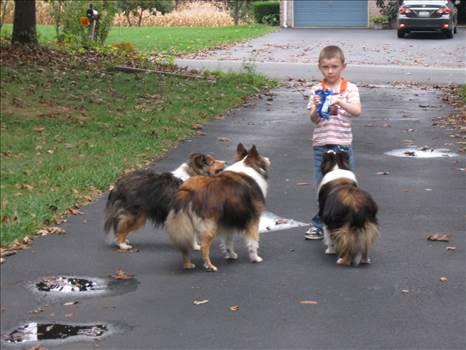 Aiden Kasey Shadow Lassie.JPG by tim15856