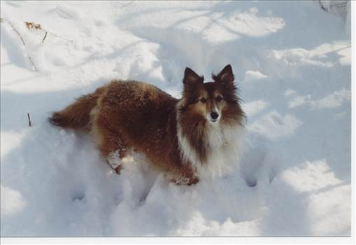 foxy lady.jpg by tim15856
