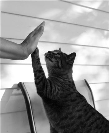 High 5.JPG by Shirley Blaine Photography