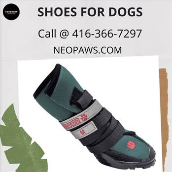 Shoes For Dogs by neopaws