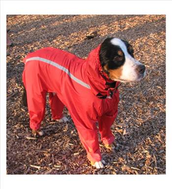 rain/bodysuits for dogs by neopaws