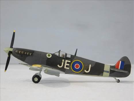 SpitfireRapideBuffalo 009.JPG by adey m