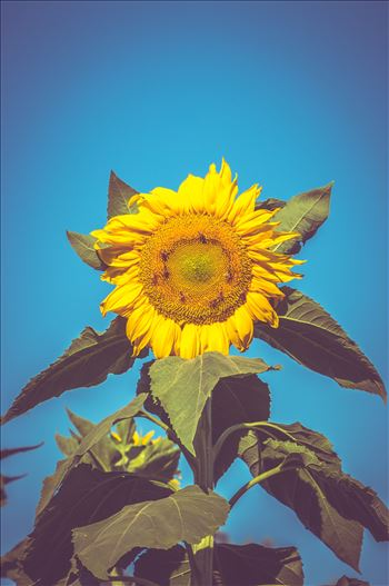 """Raining Sunlight"" by Eddie Zamora"