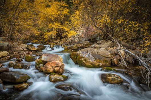 """Big Cottonwood Canyon"" by Eddie Zamora"
