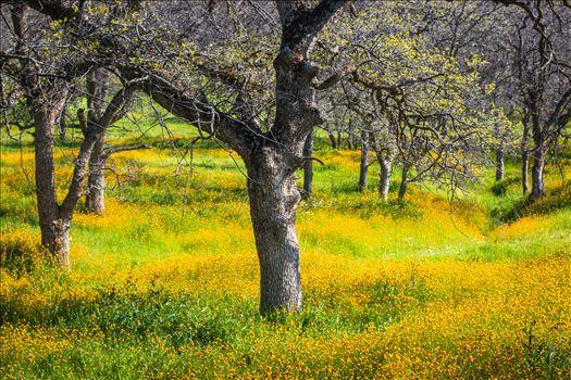 """Foothill Woodland"" by Eddie Caldera Zamora"