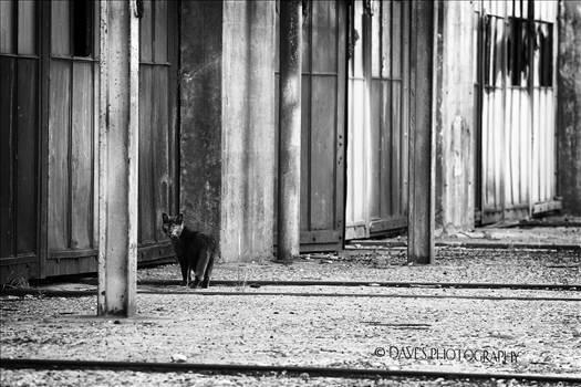 Kitty! by David Verschueren