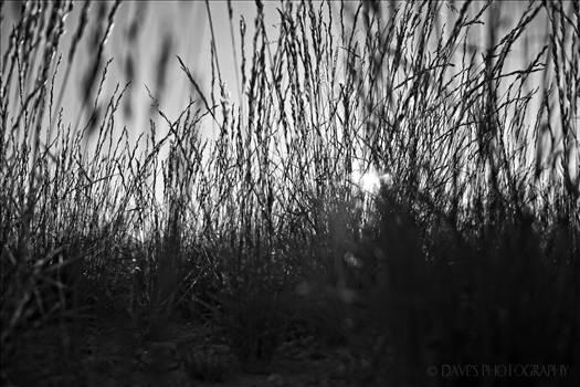 Grass at Sunset...That is All by David Verschueren