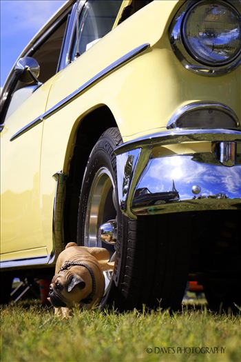 Mike Orr's 1955 Chevy Bel-Air by David Verschueren