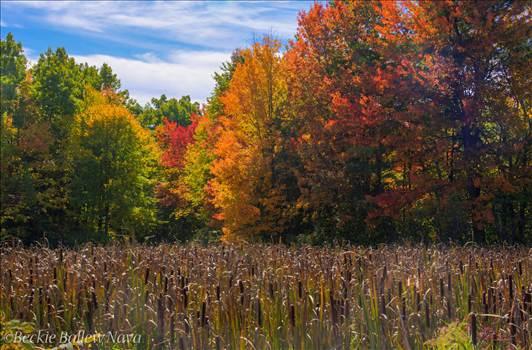 Boston Fall Foliage.jpg by Beckie Nava
