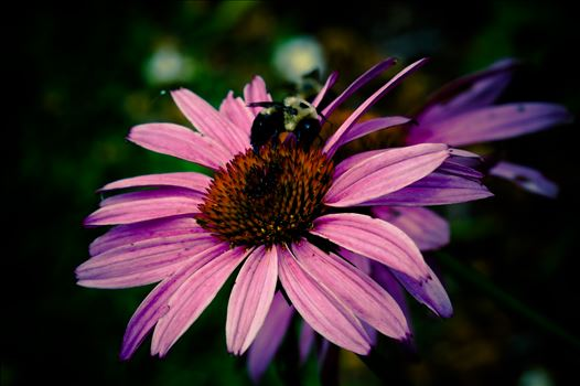 Bee on Flower.jpg by ArturoVazquez