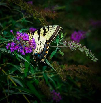 Monarch Butterfly on a Flower.jpg by ArturoVazquez