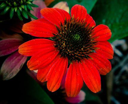 Red Flower Bloom.jpg by ArturoVazquez