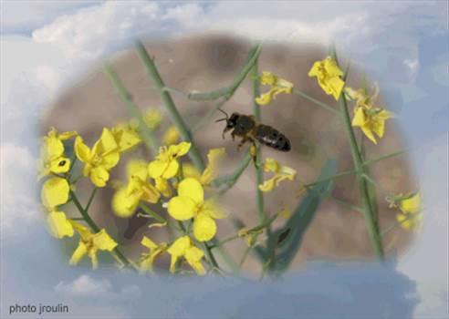 bug2.gif by arbee