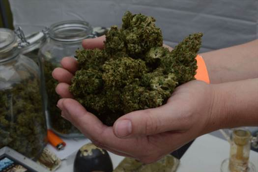 Buy High Quality Cannabis Online - 420lifecannabis by 420lifecannabis